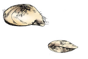 The Quagga Mussel