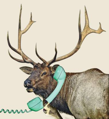 The International Sportsmen's Expo is complete with an elk-calling competition.
