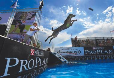 Swim team: Dog diving comes to the Rio this weekend.
