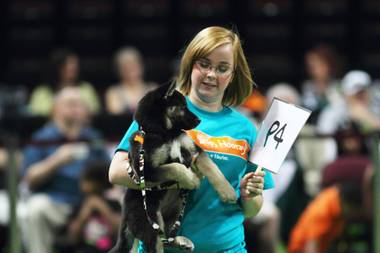 How can you resist him? You can't. Attend the Animal Foundation's 10th annual Best in Show to bask in the cuteness and make a difference in a sweet, deserving dog's life.