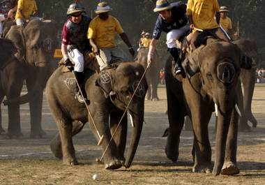 Ladies and gentlemen, elephant polo. Slightly slower than your average pony game.