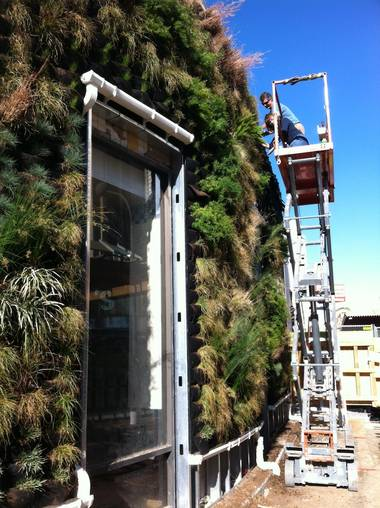 "Workers install plants on Bier Garten's outdoor ""living wall."""